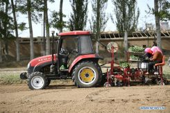 Self-driving tractors using BeiDou are helping farmers plant vegetables, such as at Tawan Village of Wuzhong City in China's Ningxia Hui Autonomous Region. The smart tractor uses the BeiDou navigation system to help local farmers improve efficiency and modernize agricultural work. (Photo: Wang Peng, Xinhua News Agency)