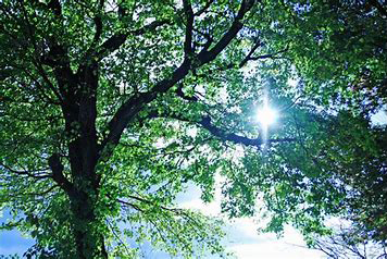 Sunlight through a tree canopy. (Photo: RedTail)
