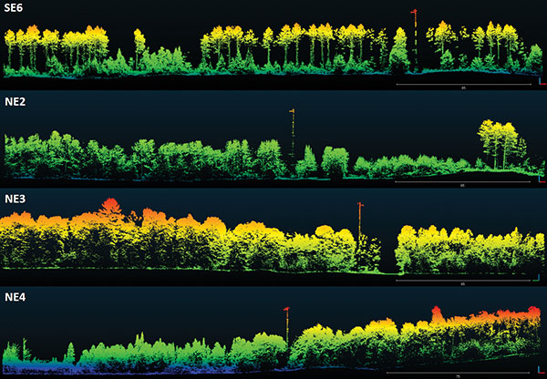 Visualization of dominant tree structures in Northern Wisconsin around the flux towers. (Image: Routescene)