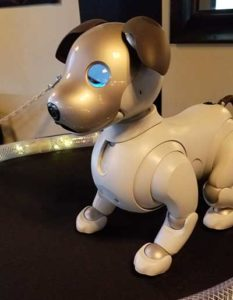 The Aibo robot dog uses artificial intelligence to mimic a real puppy's behavior. (Photo: Kevin Dennehy)