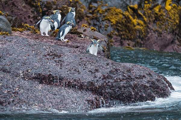 Photo: Rock penguins/Charles Bergman/Shutterstock.com